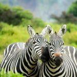 Top 7 Safari Travel Essentials to bring on your Kenya Safari