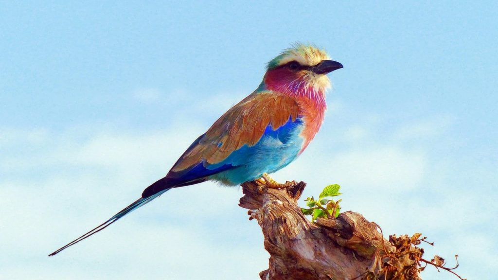 Top Class Birding in a Kenya Safari