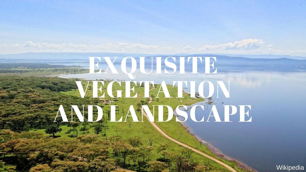 Exquisite Vegetation and Landscape