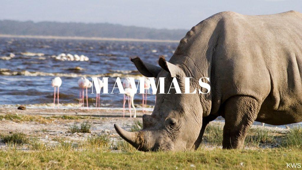 Lake Nakuru National Park Mammals