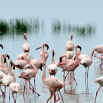 Lake Nakuru National Park: Africa's Own Paradise