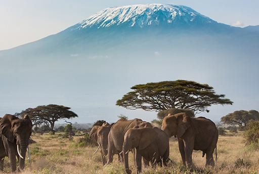 Mt, Kilimanjaro