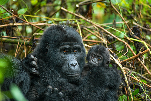 Bwindi and Kibale National Park
