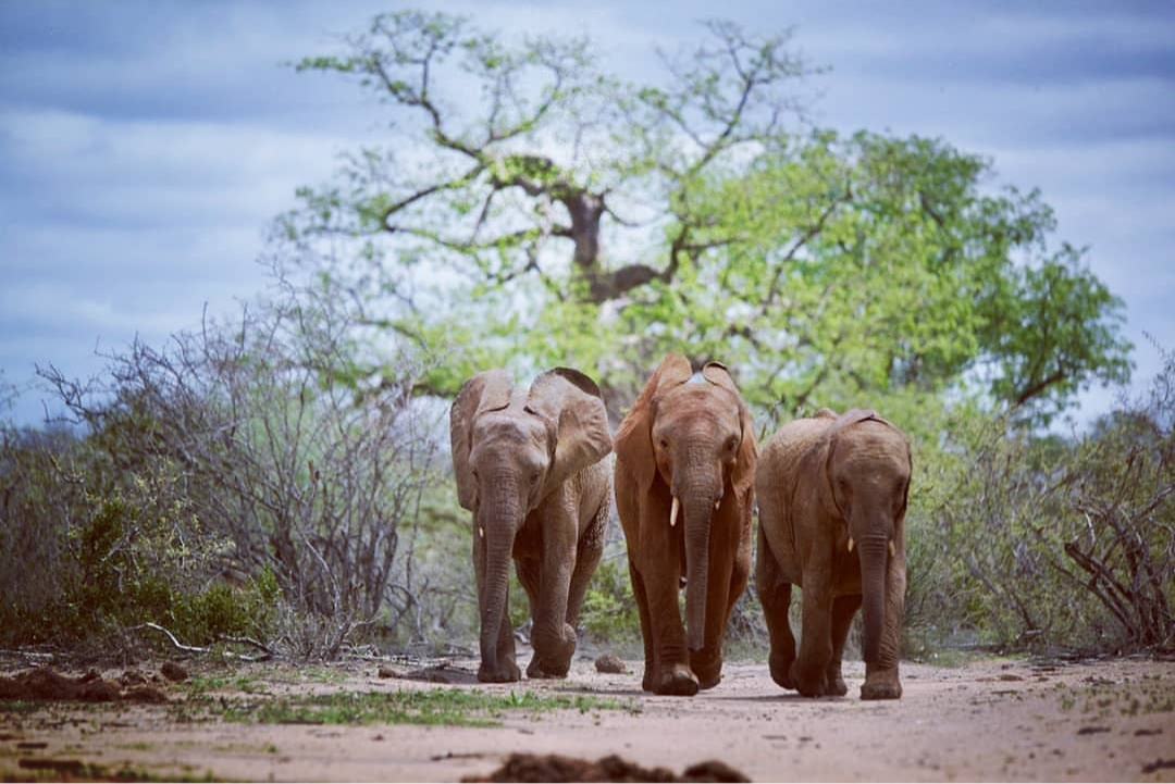 Elephants running to a water hole