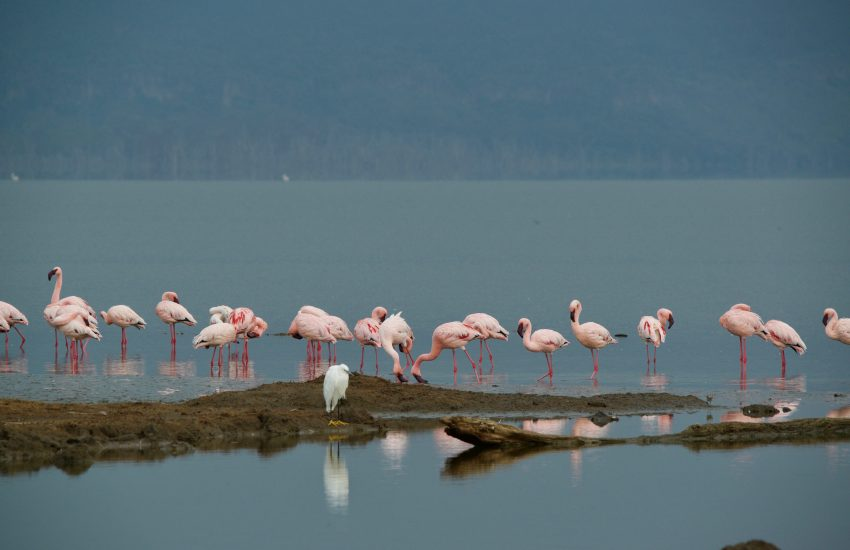 Flamingos at Lake Nakuru National Park