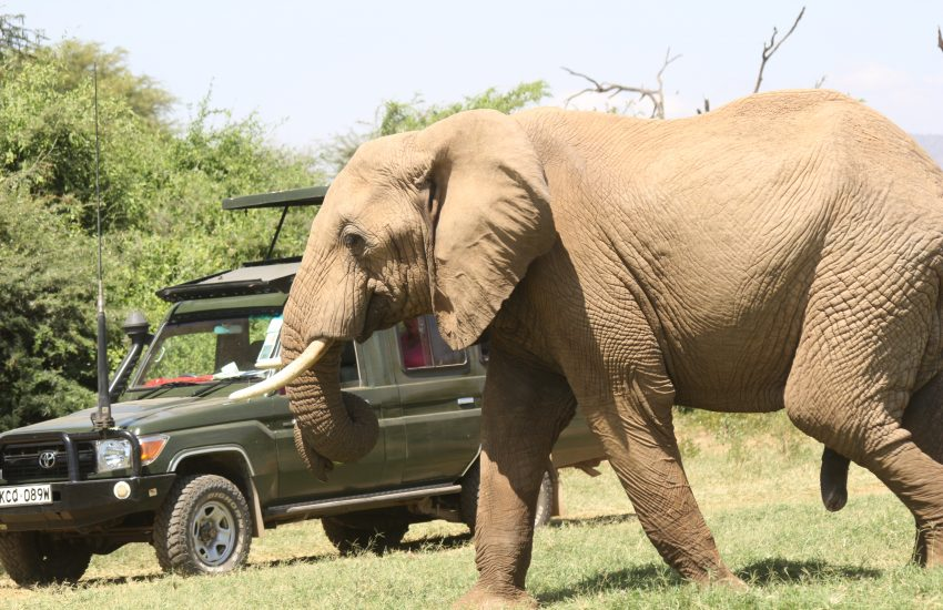 Game drive in Samburu National Reserve