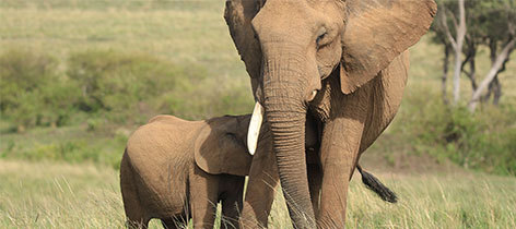 10 Days 9 Nights Nairobi, Maasai Mara, Lake Nakuru, Samburu and Mombasa