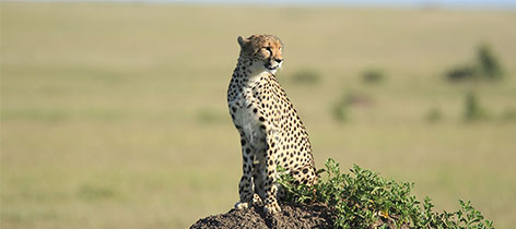 9 days Amboseli, Mt. Kenya, Samburu and Maasai Mara Flying Honeymoon Safar