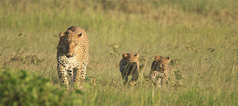 7 Days Kenya Honeymoon Safari