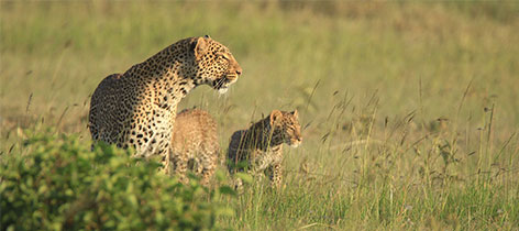 8 Days of Amazing Kenya Holiday Safari