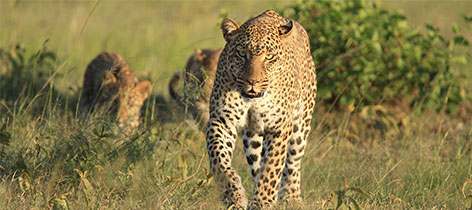 6 Days Tour OlPejeta, Aberdares, Lake Nakuru and Maasai Mara Family Safari