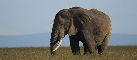 8 Days Ol Pejeta-Masai Mara-Amboseli-Luxury-Kenya-Safari