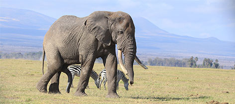 9 Days 8 Nights Into the Wild Kenya and Tanzania Luxury Safari