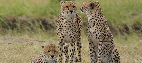 3 Days 2 Nights Samburu Kenya Luxury Safari