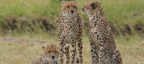 3 Days 2 Nights Samburu Kenya Luxury Safari