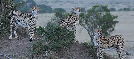 2 Days 1 Night Sweetwaters Game Sanctuary Kenya