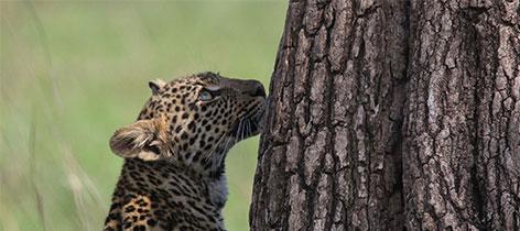 Things You Can Do To Make Traveling Easier - Kenya Safaris tour-thumb-77
