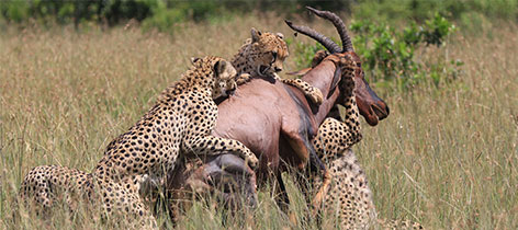 9 Days Classic Kenya Family Safari