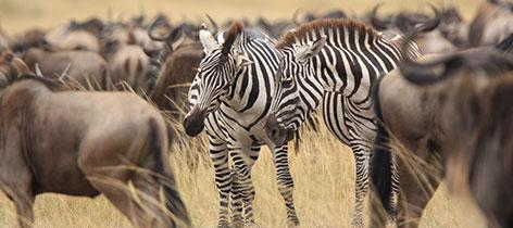 13 Days Kenya Extensive Safari