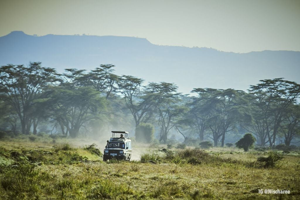 Game Dive at Lake Nakuru National Park