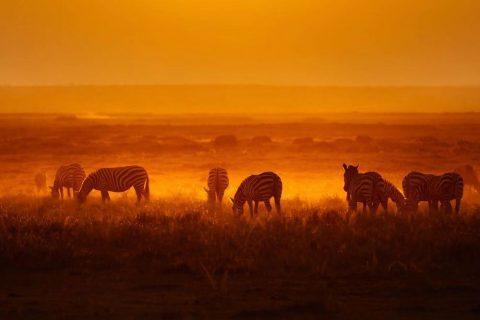 African safari tour