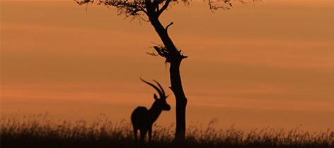 4 Days Ngorongoro-Olduvai-Serengeti Safari