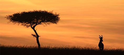 16 Days Tanzania and Zanzibar Tour