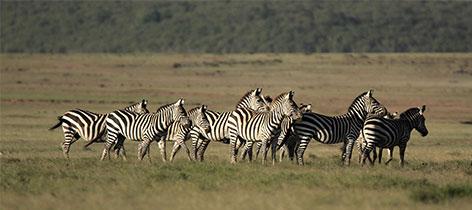 9 Days Mara–Naivasha–Nakuru–Bogoria Safaris