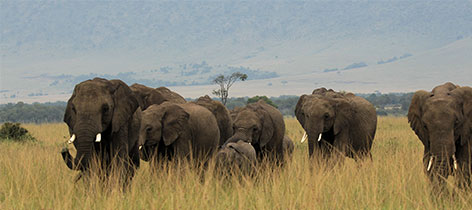 17 Days Kenya – Tanzania Northern Circuit Wildlife Safari and Zanzibar Beach Holiday