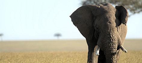 6 Day Budget Safari Ngorongoro Crater Serengeti Manyara