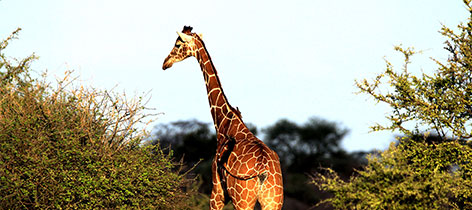 3 Days 2 Nights Lake Manyara and Ngorongoro Safari