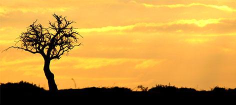 3 days Maasai Mara and Lake Nakuru Camping Safari