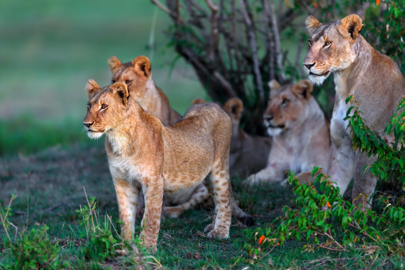 9-reasons-why-kenya-is-the-top-safari-destination-in-2018