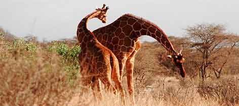Seclusion and the Serengeti Safari