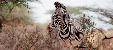Free Tips For Traveling Locally Or Abroad - African Safari Tours tour-thumb-10