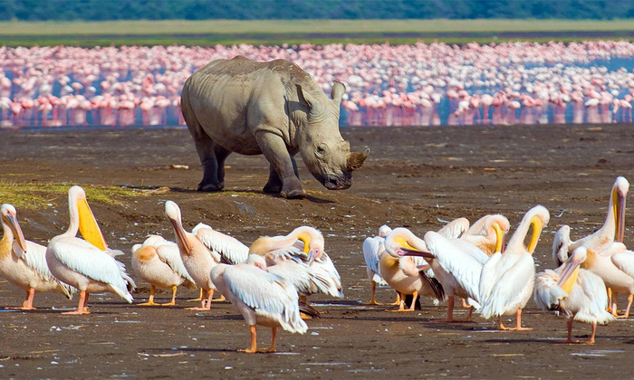 birds and rhino at lake nakuru
