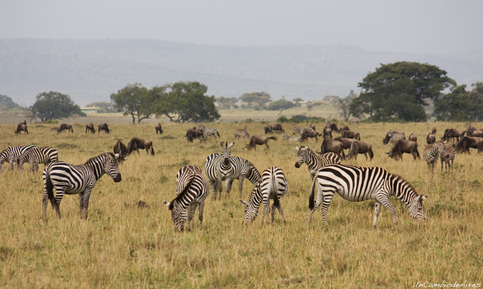 top 8 Kenya national parks and game reserves