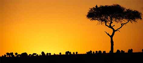 3 Days Serengeti National Park Safari