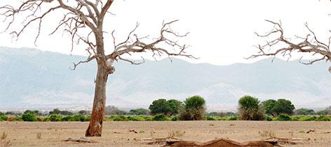 Serengeti Speciality Safari