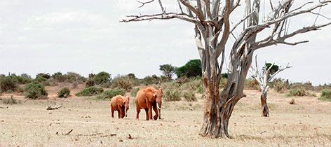 6 Days Tarangire, Serengeti, Ngorongoro and Lake Manyara Safari