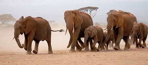 9 Days Tarangire, Serengeti, Ngorongoro and Lake Manyara Safari