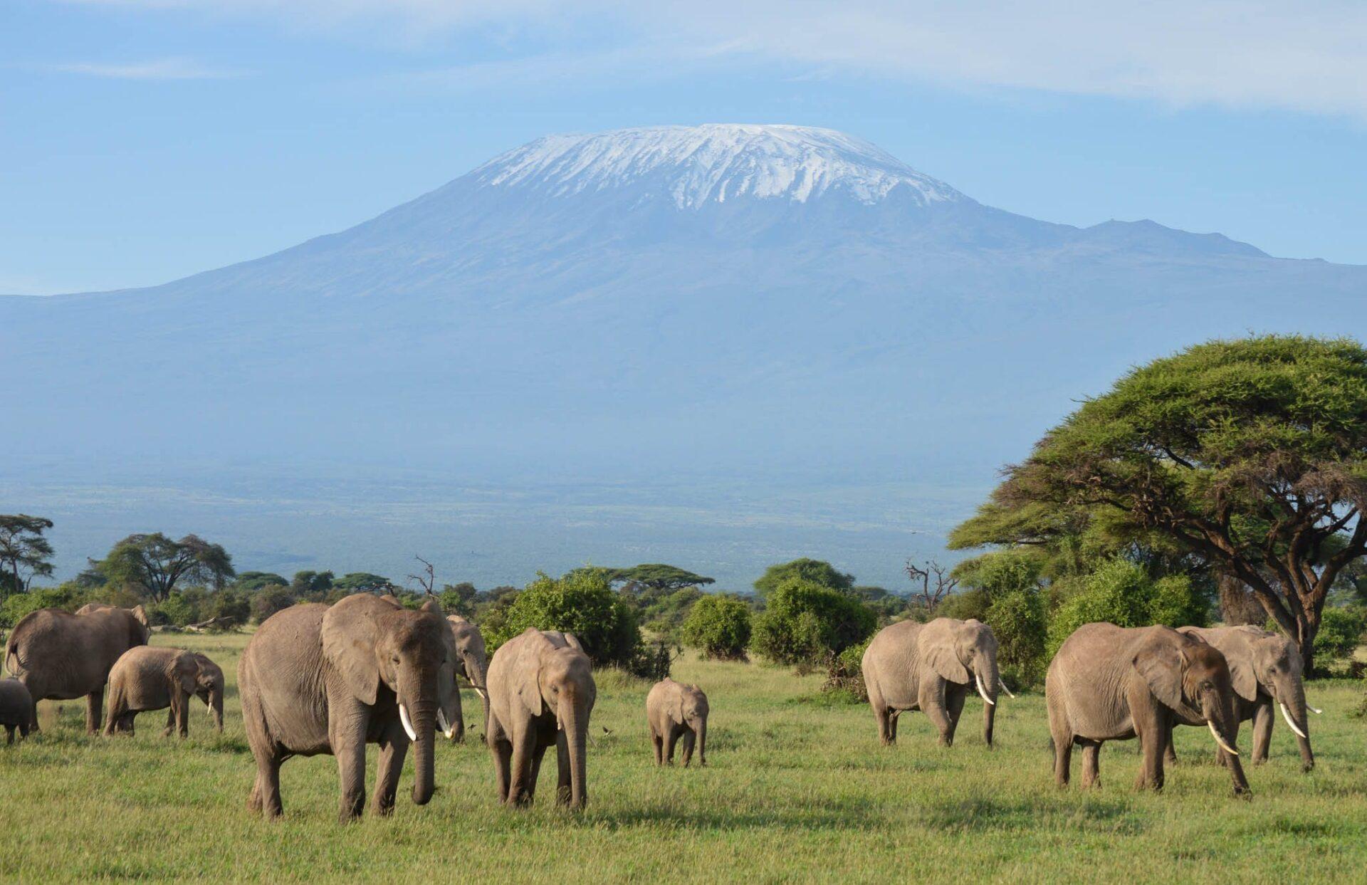 elephants in amboseli park