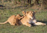 Top Kenya Wildlife Parks in 2019