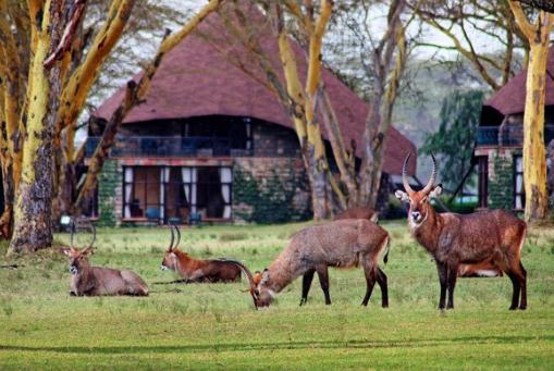 Lake Naivasha Sopa Lodge