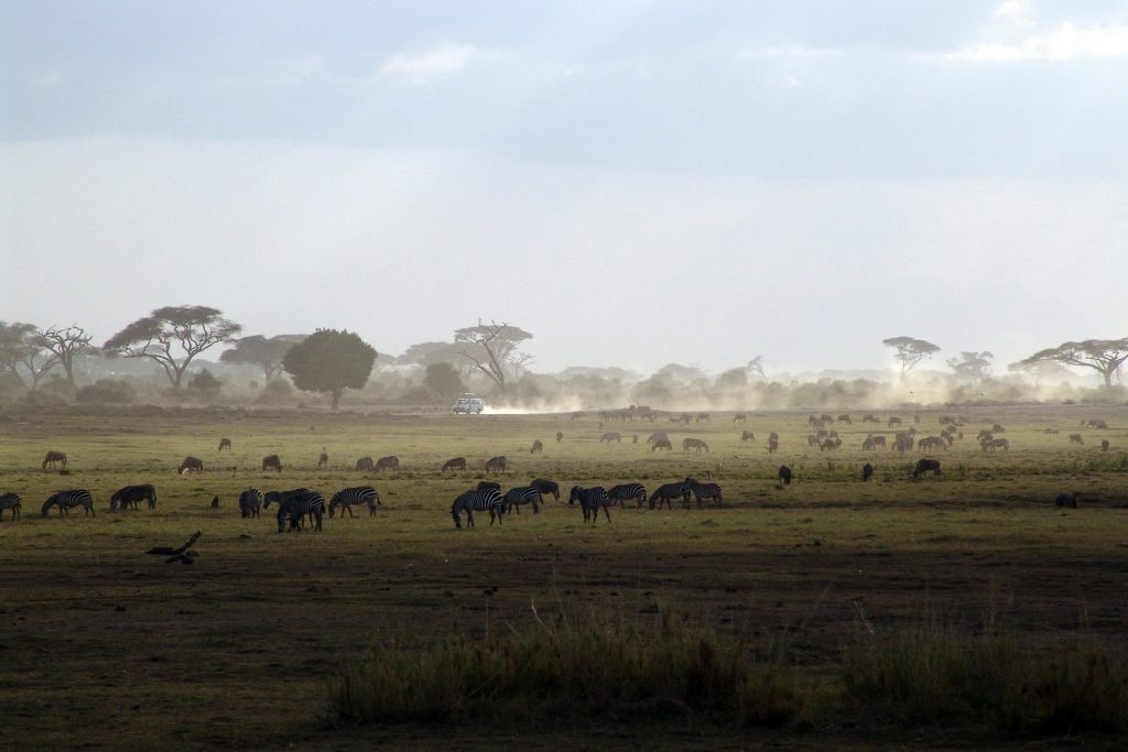 Safari View in Kenya