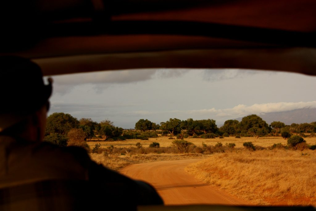 Enjoy A Tailor Made Safari Adventure