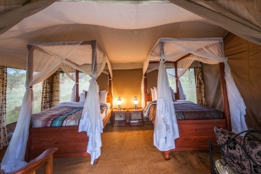 Serengeti Acacia Camp