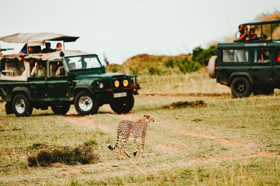 Group Joining Safari