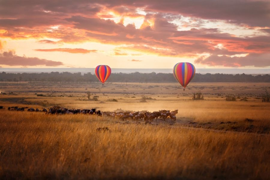 The masai mara scenery, wildlife ang hot air balloon