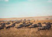 Is Kenya a Safe Travel Destination?